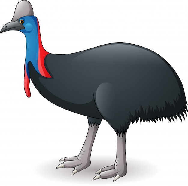 Illustration of cassowary isolated on white background