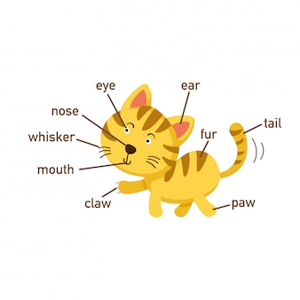 Illustration of cat vocabulary part of body.vector