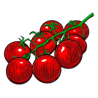 Illustration of cherry tomatoes isolated on white. design element for poster, card, banner, flyer, menu. vector illustration