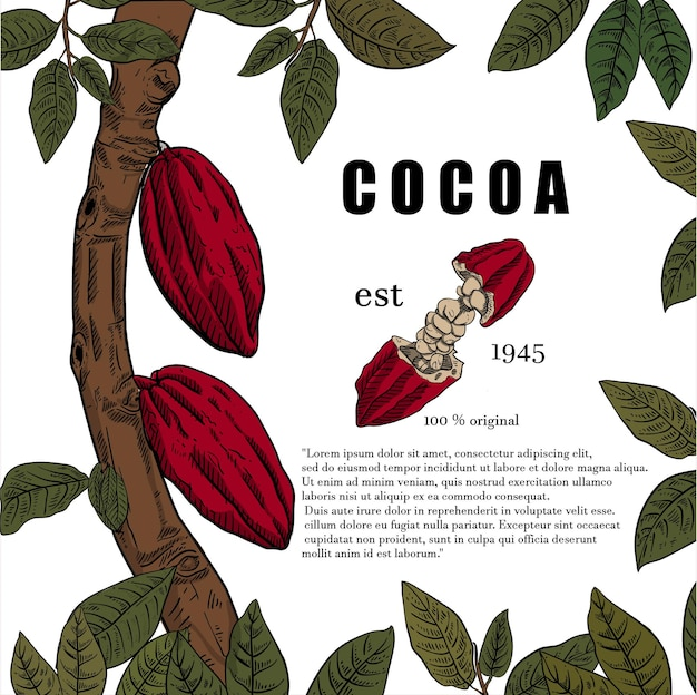 Illustration of  cocoa tree poster in engraving style