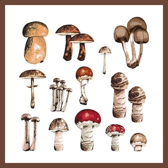 Illustration of a collection of different mushrooms.