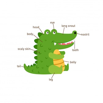 Illustration of crocodile vocabulary part of body.vector