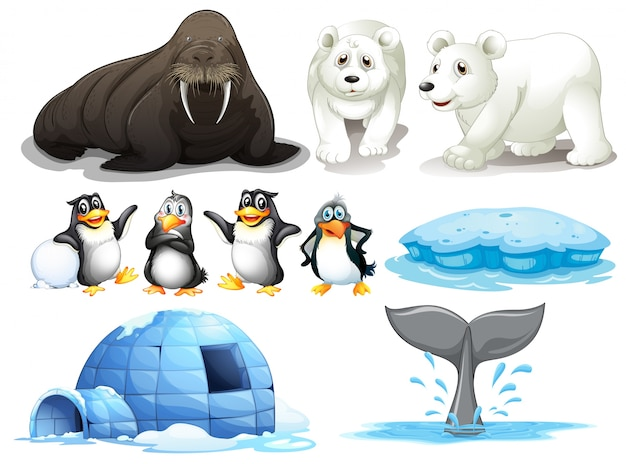 Illustration of different animals from north pole