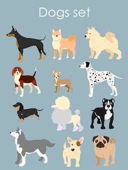 Illustration of different type of cartoon dogs. dogs set in cartoon flat style on light blue background.