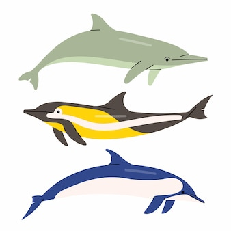 Illustration of dolphins. white background.