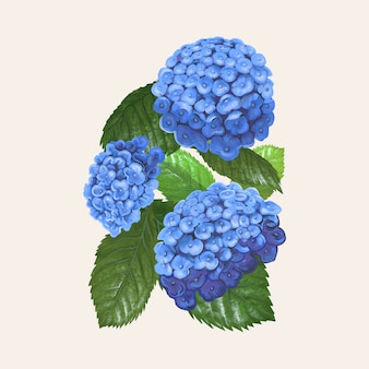 Illustration drawing of hydrangea