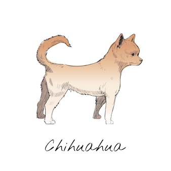 Illustration drawing style of dog