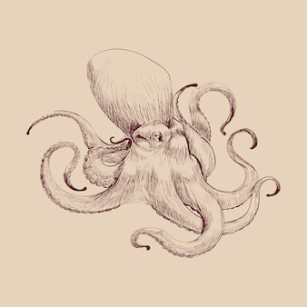 Illustration drawing style of octopus