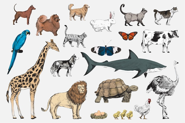 動物コレクションのイラストの描画スタイル