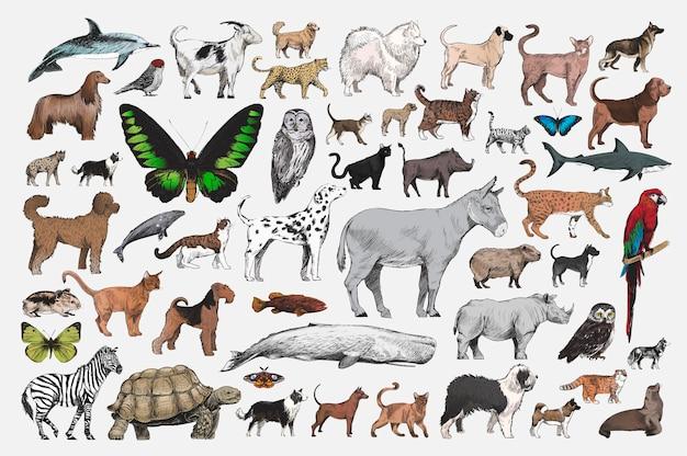 Стиль рисунка рисунка коллекции животных