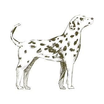 犬のイラストの描画スタイル Premiumベクター