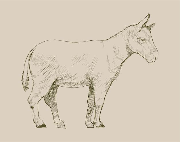 당나귀의 그림 그리기 스타일