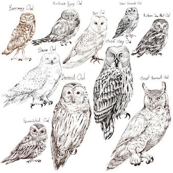 フクロウの鳥のコレクションのイラストの描画スタイル