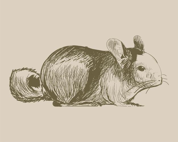 ラットのイラストの描画スタイル