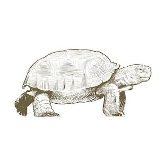 거북이의 그림 그리기 스타일