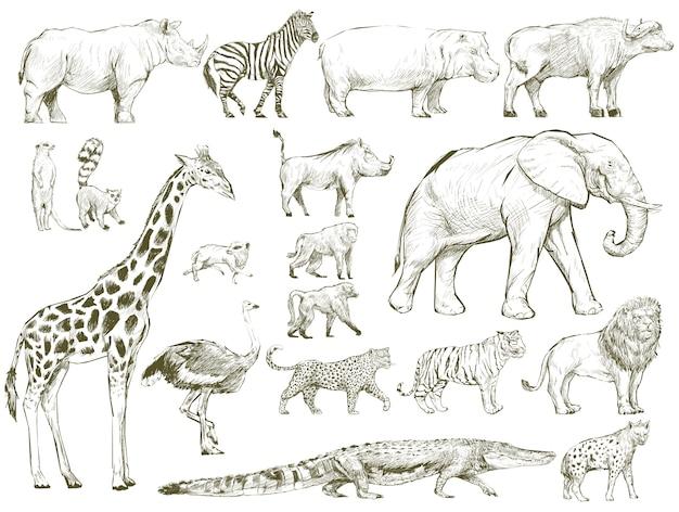 野生動物コレクションのイラストの描画スタイル
