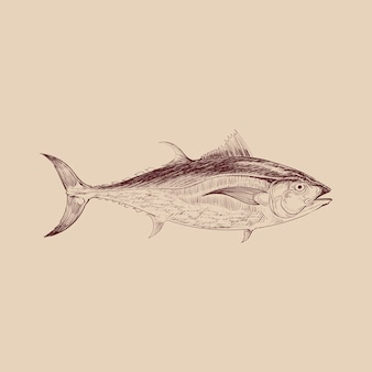 Illustration drawing style of sea fish
