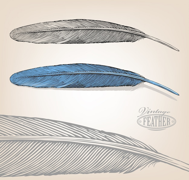 Illustration of feather in vintage engraving style