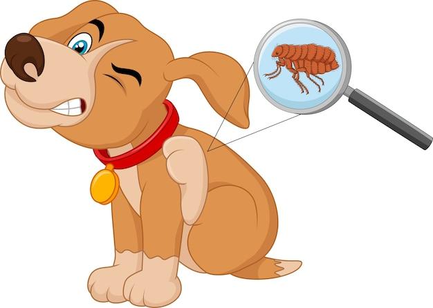 Illustration of flea infested dog