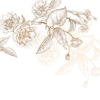 Illustration of flowers plum tree.