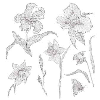 Illustration of graphically hand-drawn flowers. imitation engraving. blooming irises and daffodils.