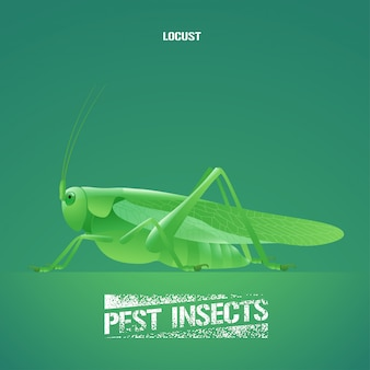 Illustration of green insect acrididae (locust, grasshopper)