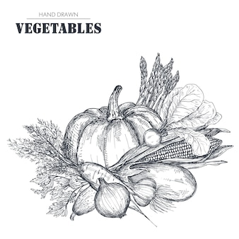Illustration of hand drawn   farm vegetables in sketch style.
