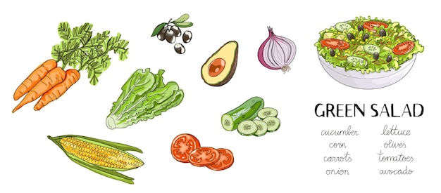 Illustration of hand drawn green salad ingredients: