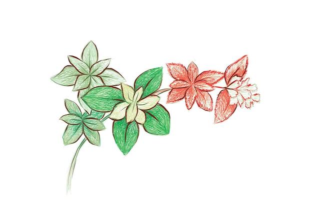 Crassula marginalis rubravariegataまたはcalicokitten asucculentのイラスト手描きスケッチ