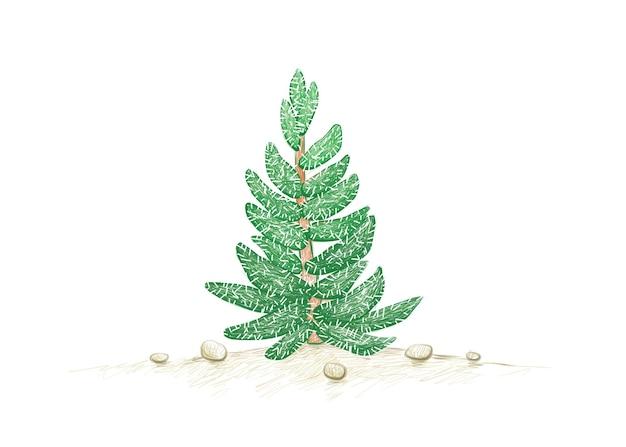 Crassulamesembryanthemoidesまたはtenelliplant a succulentplantsのイラスト手描きスケッチ