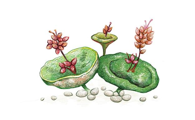 붉은 꽃과 즙이 많은 식물과 crassula 우산 또는 와인 컵의 그림 손으로 그린 스케치