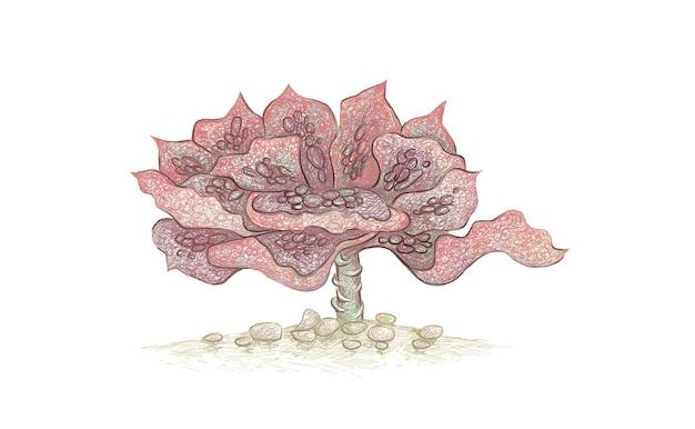 エケベリアエトナのイラスト手描きスケッチ。庭の装飾のための多肉植物。