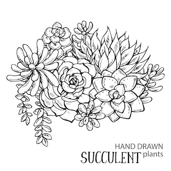 Illustration of hand drawn succulent plants. black and white graphic for print, coloring book.  on white background.