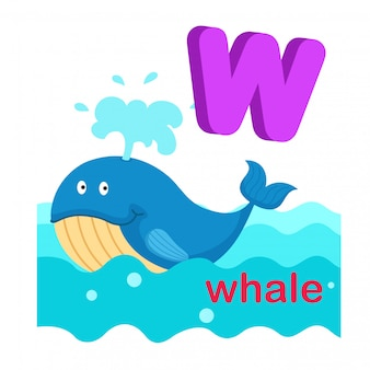 Illustration isolated alphabet letter w whale.vector