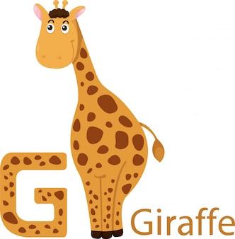 Illustration of isolated animal alphabet g for giraffe
