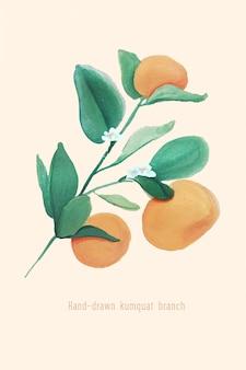 Illustration of kumquat branch