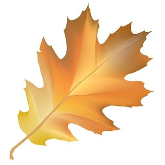 Illustration of leaf isolated on white background