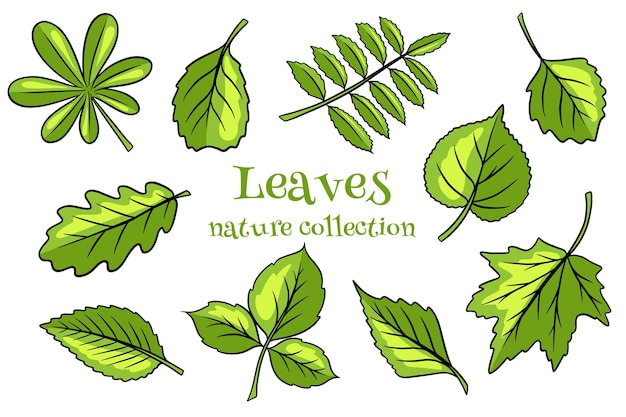 Illustration of leaves with different shapes