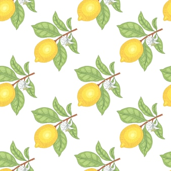 Illustration of lemons. seamless  pattern. fruits on a white background.