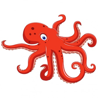 Illustration of octopus animal cartoon