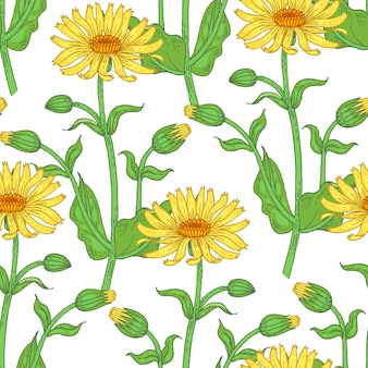 Иллюстрация арники. бесшовные модели. цветы лекарственных растений на белом фоне.