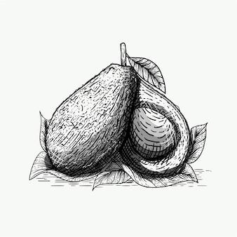 Иллюстрация авокадо в стиле гравюры