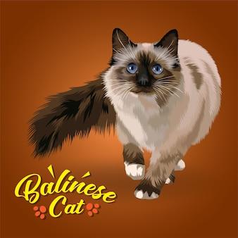 Иллюстрация балийской кошки.