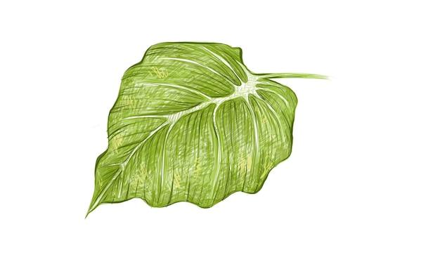아름다운 코끼리 귀 또는 philodendron 잎의 그림
