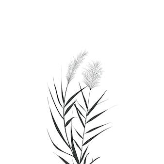 Иллюстрация черно-белых тростников. силуэт тростника на белом фоне.