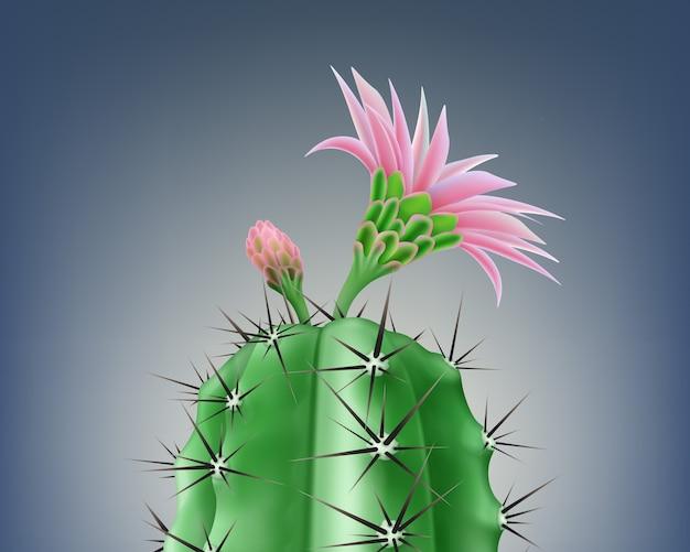 Иллюстрация цветущего кактуса с ярко-розовым цветком