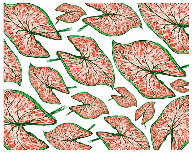 Caladium, 코끼리 귀 또는 colocasia 식물 배경 그림