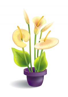 葉と鉢のあるカラのイラスト。花、家の植物、ユリ。花のコンセプト。