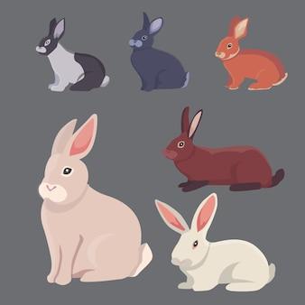 漫画のウサギのさまざまな品種のイラスト