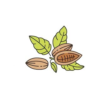 코코아 콩의 그림입니다. 선형 스타일 아이콘. 초콜릿 코코아 콩.